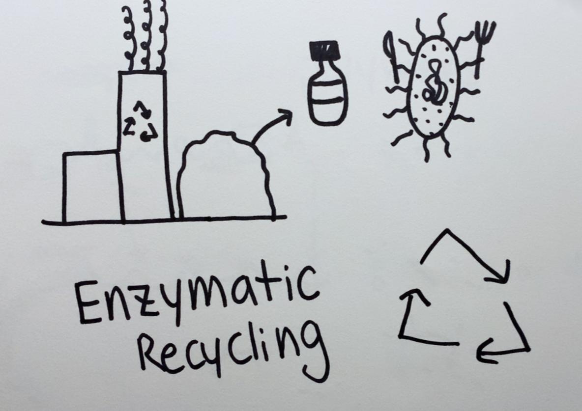 Enzymatic Recycling