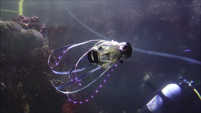 Squid-like robot swims through a tank