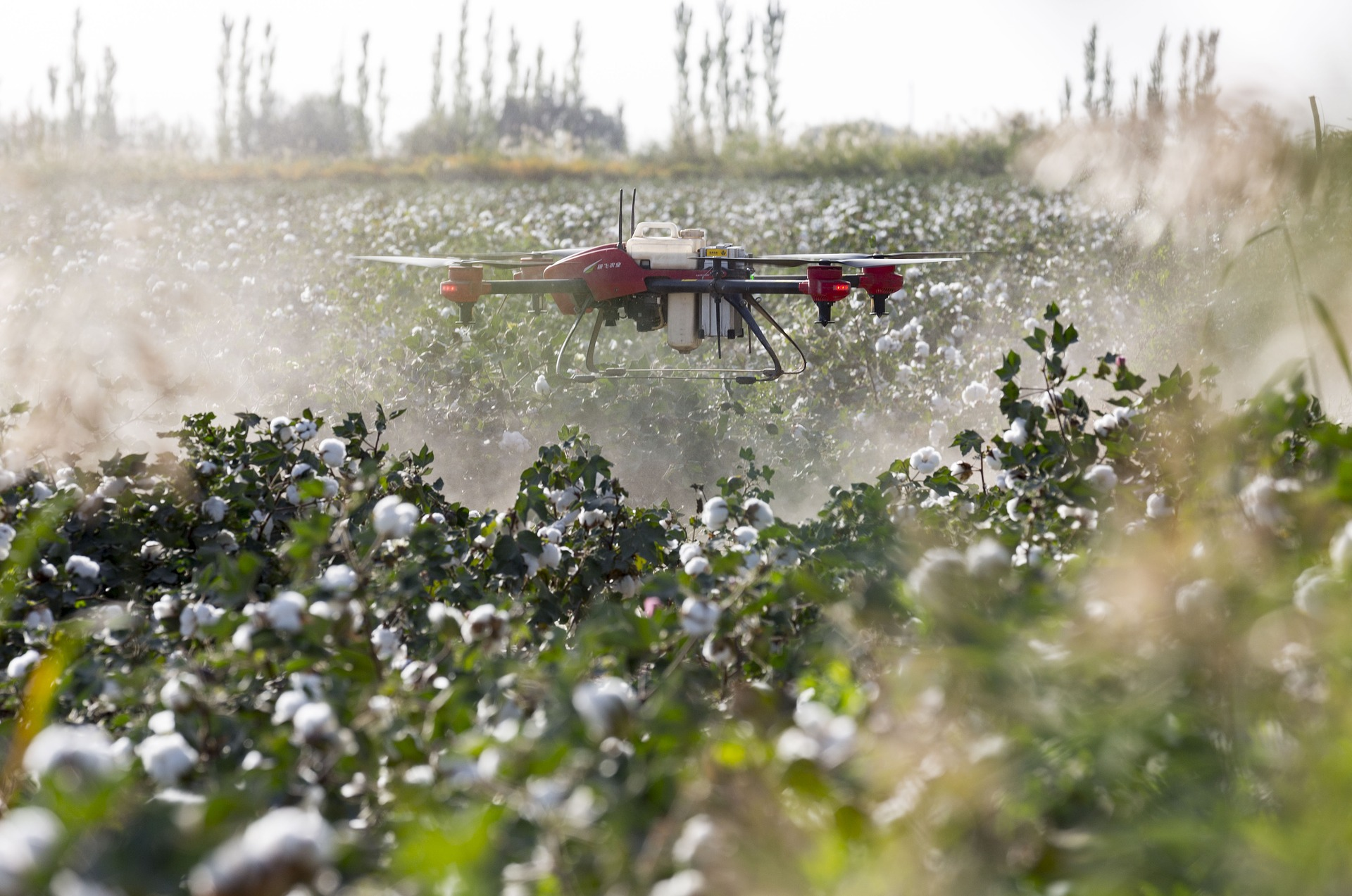 A red and black, 4-propeller drone hovers a few feet above green cotton plants in a field, emitting a fine white mist of pesticides.