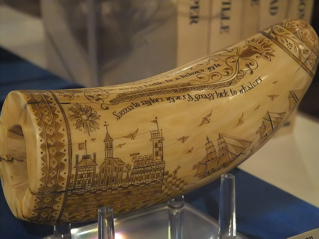 Scrimshaw: a carving made in a sperm whale's tooth